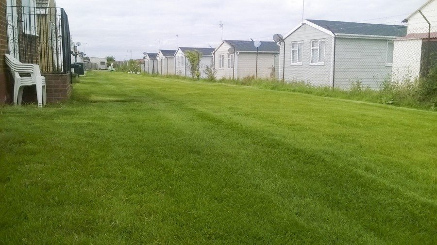 Sowing a new lawn when and how featured image