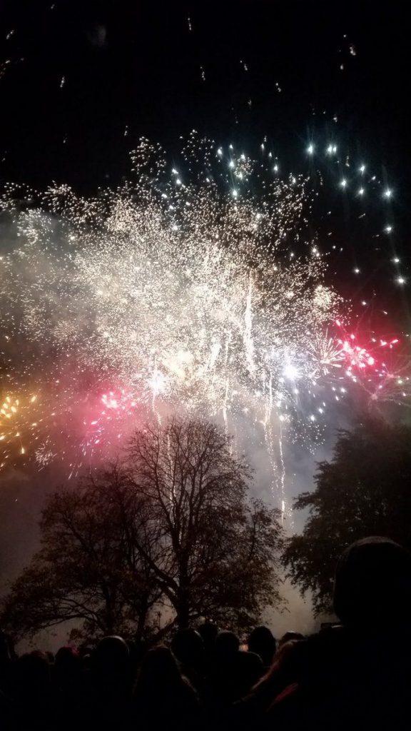 Fireworks - Grass Mats Botanical Gardens Illuminate The Gardens