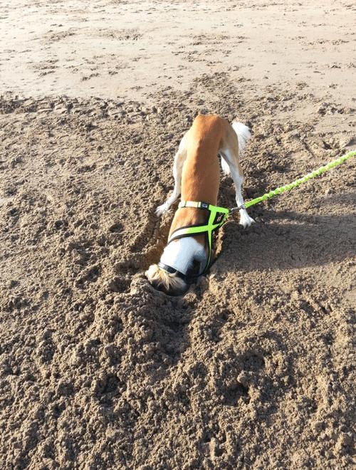 Dog Grass Mesh Bonus