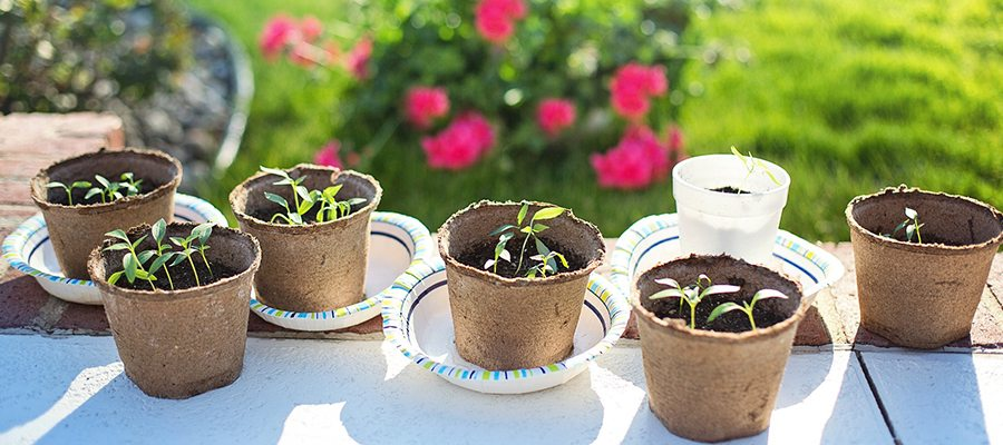 March Gardening Tips Featured Image