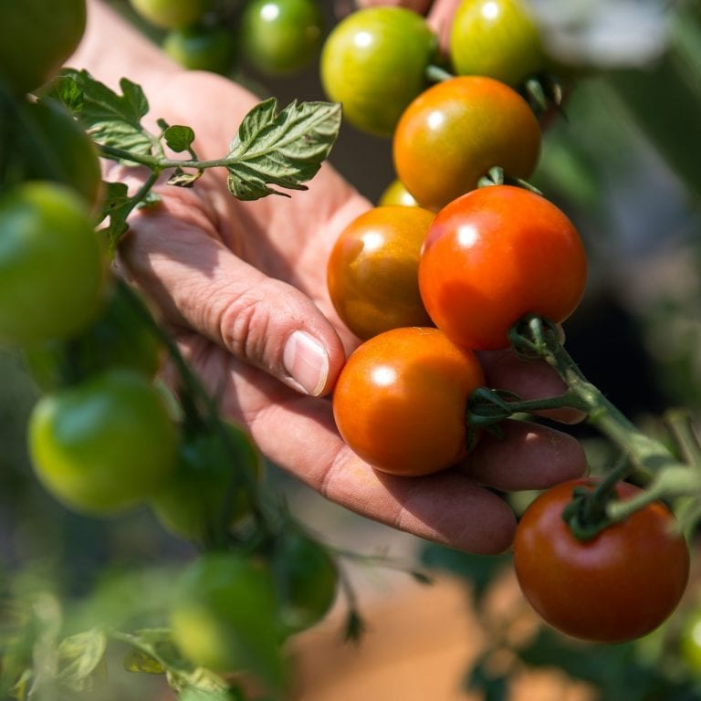 MatsGrids March Gardening Guide: Fruits and Vegetables