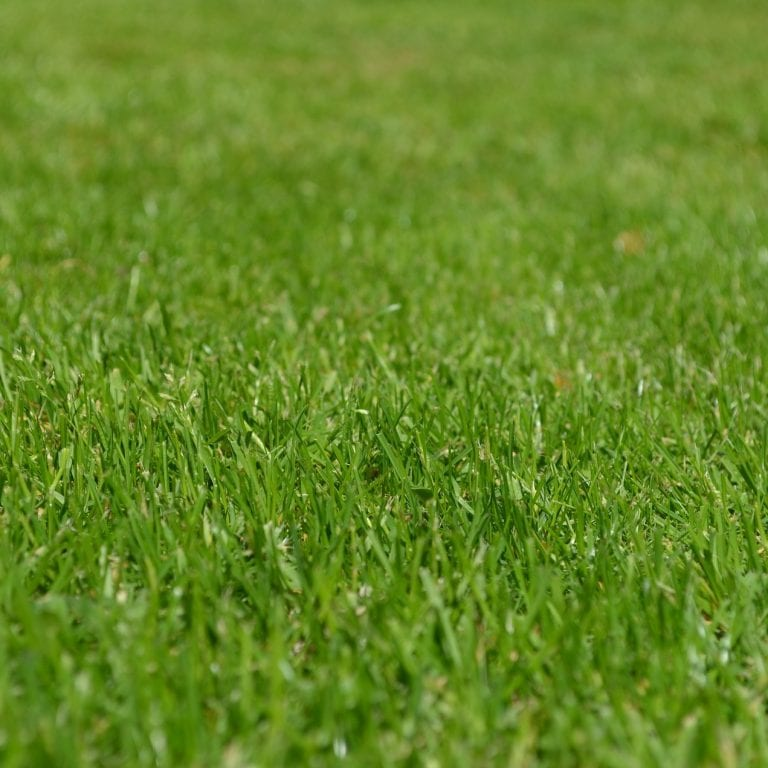 MatsGrids March Gardening Guide: Maintaining Your Lawn