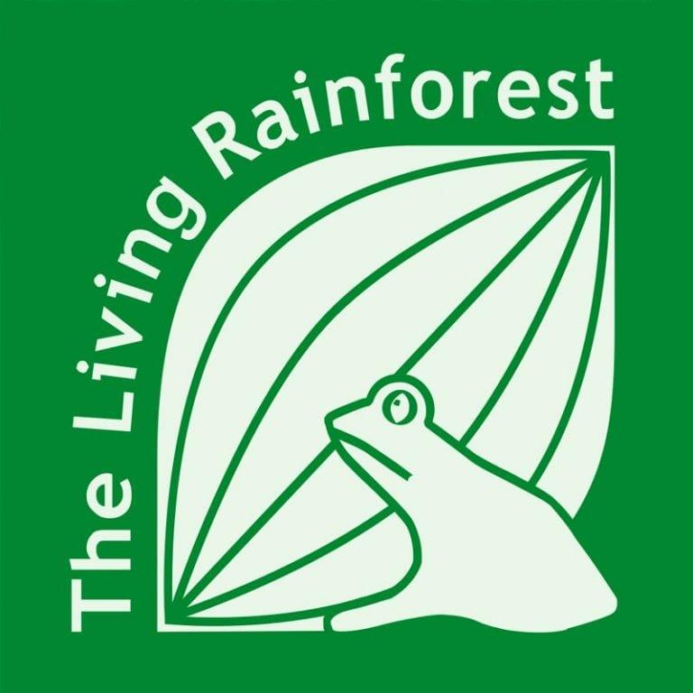 Using Rubber Grass Mats Under A Play Area: The Living Rainforest