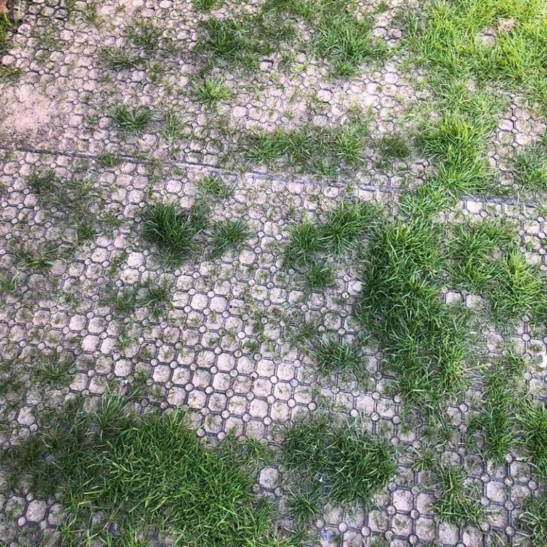 Installing Grass Mats